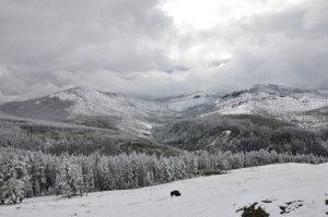 Bison winterscape