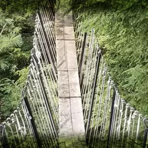 Real Life Adventures: Haliburton Canopy Walk and Wolf Centre